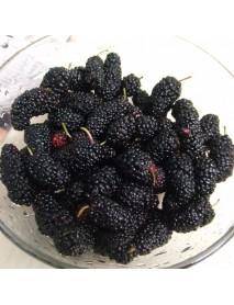 100Pcs Black Mulberry Seeds Morus Nigra Tree Garden Bush Seeds DIY Home Garden Bonsai