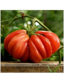 100 PCS Giant Tomato Plants Seeds Organic Heirloom Plants Vegetables Seeds Perennial Non-GMO Plant Pot