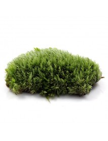 DIY Mirco Landscape Moss Plant Natural Wild Leucobryum Bowringii Glass Bottle Decorations
