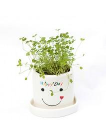 DIY Mini Lucky Angel Grass Potted Lovers Plant Desktop Decor