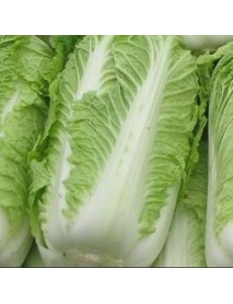 100Pcs Chinese Delicious Cabbage Seeds Nutritious Green Vegetable Seeds Brassica Plants Garden